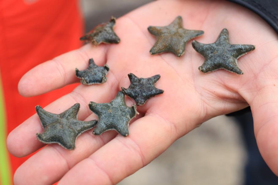 étoiles mer