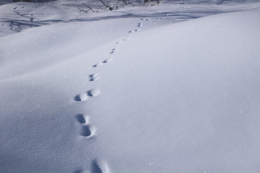 activités montagne hiver