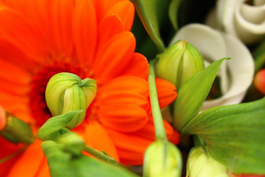 parce que les fleurs dans une maison, c'est joli - la fille de l'encre