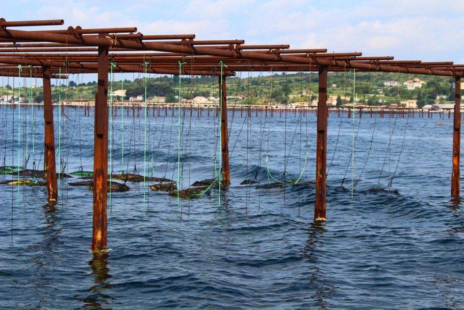 huitres étang de thau