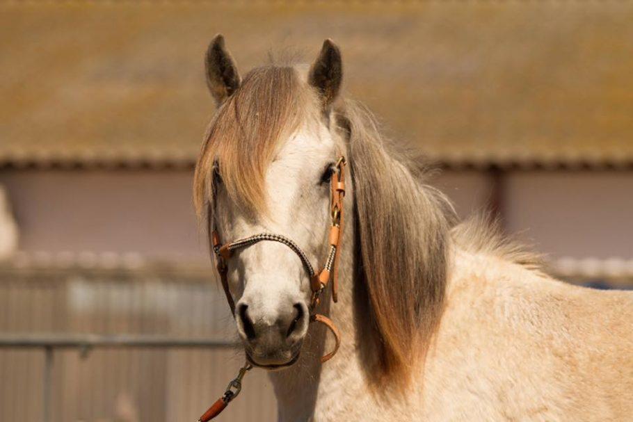 balade à cheval espiguette