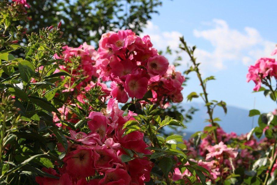 fleurs les angles