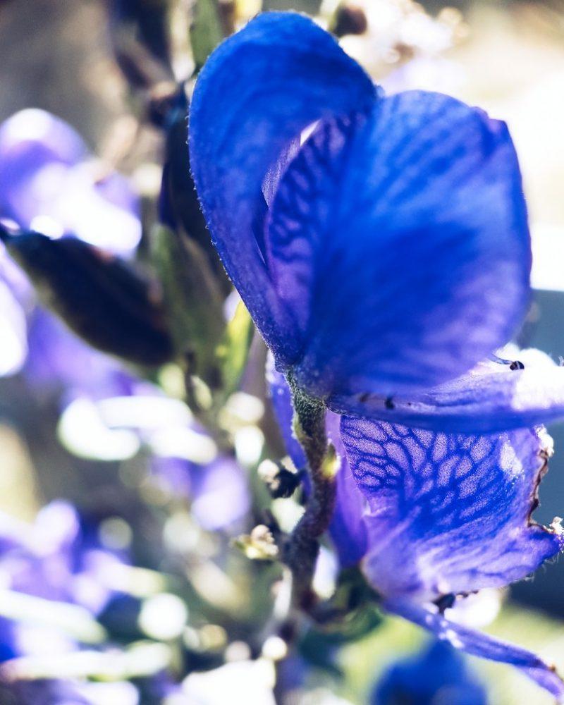 sortie fleurs les Angles