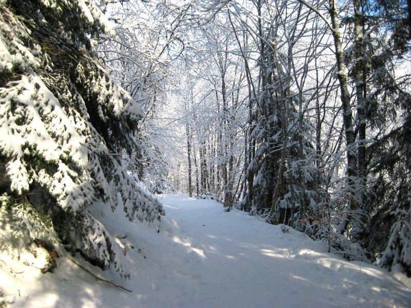 randonnée raquette Vosges