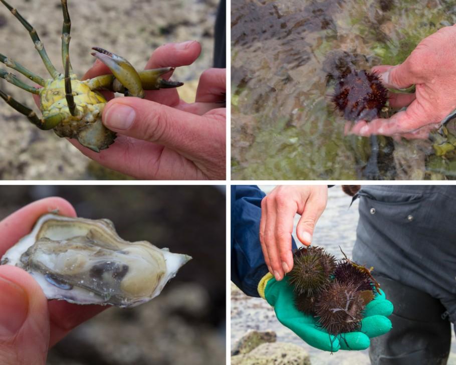 pêche à pied ile d'oleron