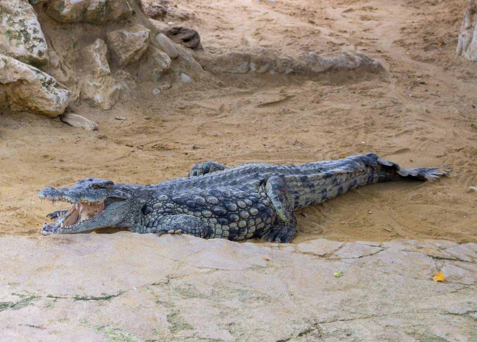 famille ferme aux crocodiles