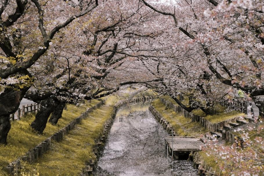 farmstay japon
