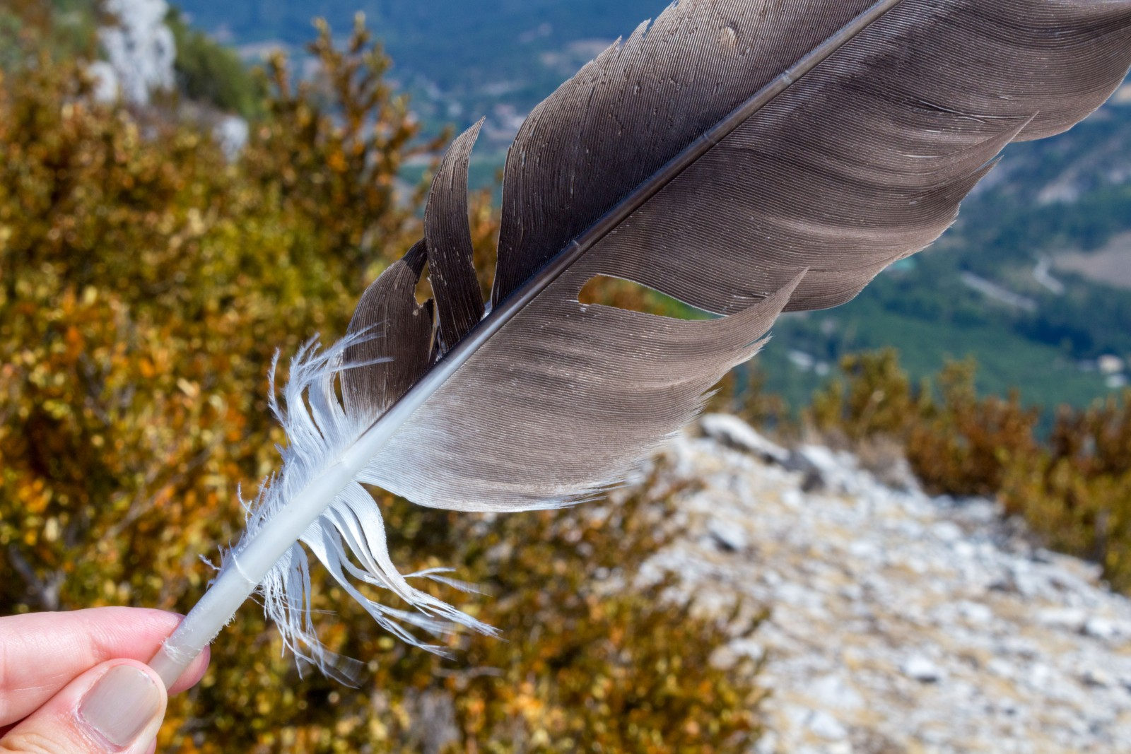 sortie vautours drome