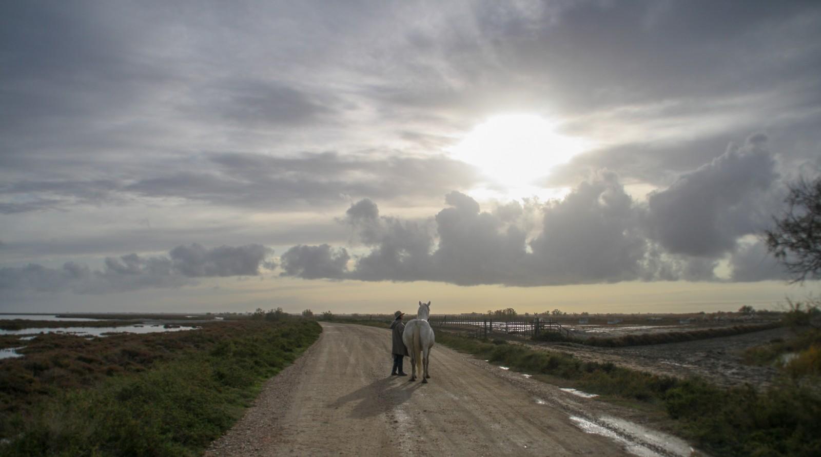 cheval camargue photo