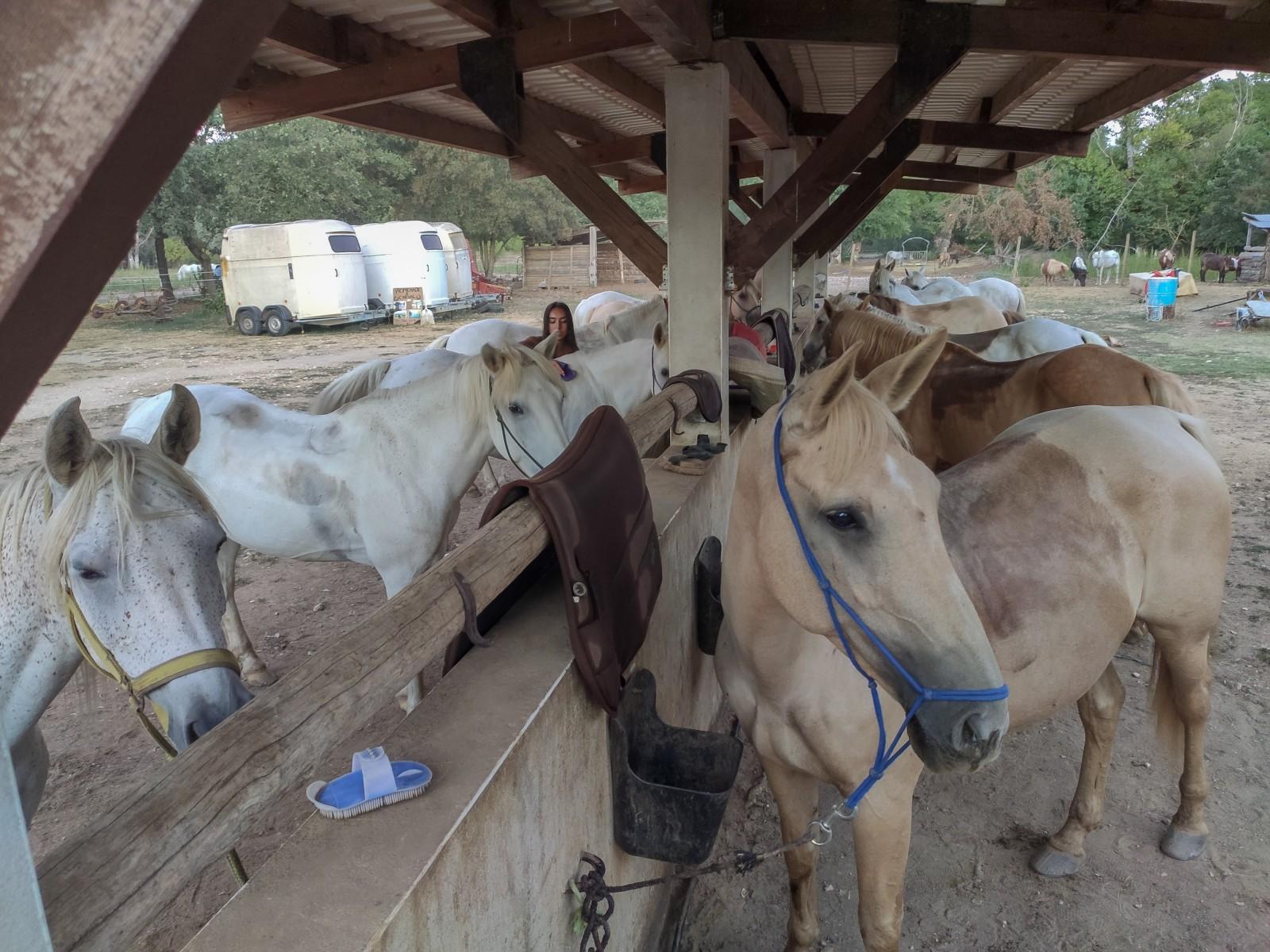 balade à cheval provence occitane