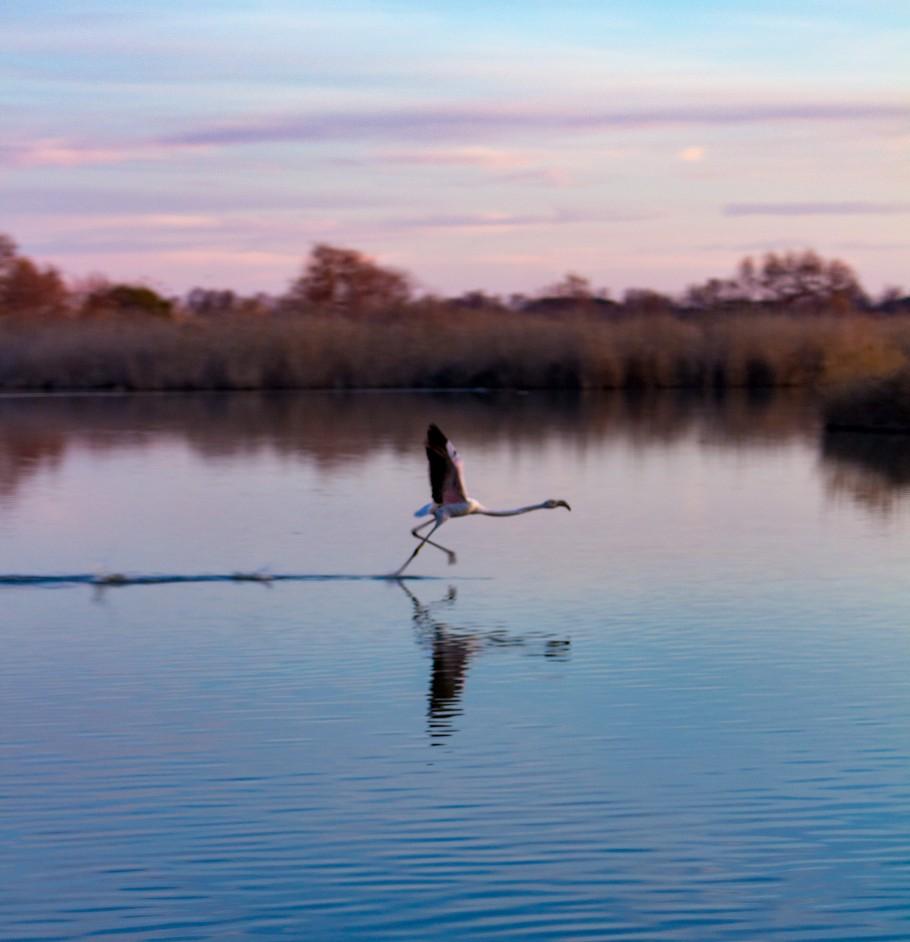quand visiter le parc ornithologique du Pont de Gau ?