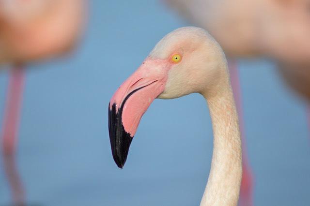 quand visiter le parc ornitologique du pont de gau ?